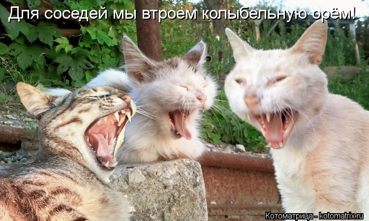 Котоматрица: Для соседей мы втроем колыбельную орём!