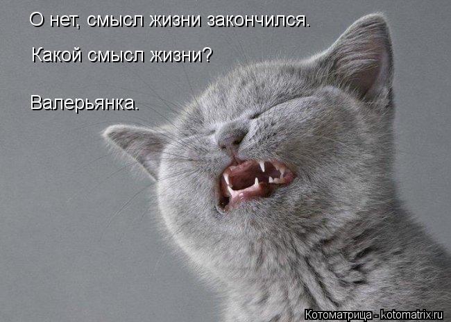 Котоматрица: О нет, смысл жизни закончился. Какой смысл жизни? Валерьянка.