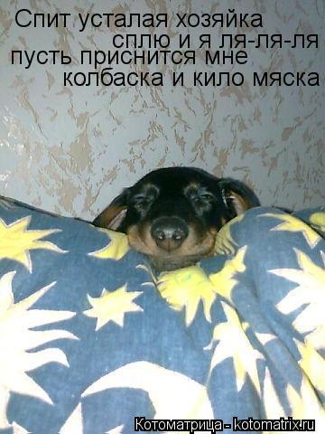 Котоматрица: Спит усталая хозяйка сплю и я ля-ля-ля пусть приснится мне  колбаска и кило мяска
