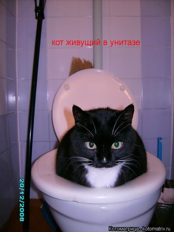 Котоматрица: кот живущий в унитазе