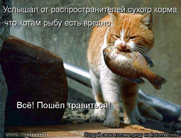 Котоматрица: Всё! Пошёл травиться! Услышал от распространителей сухого корма,  что котам рыбу есть вредно.