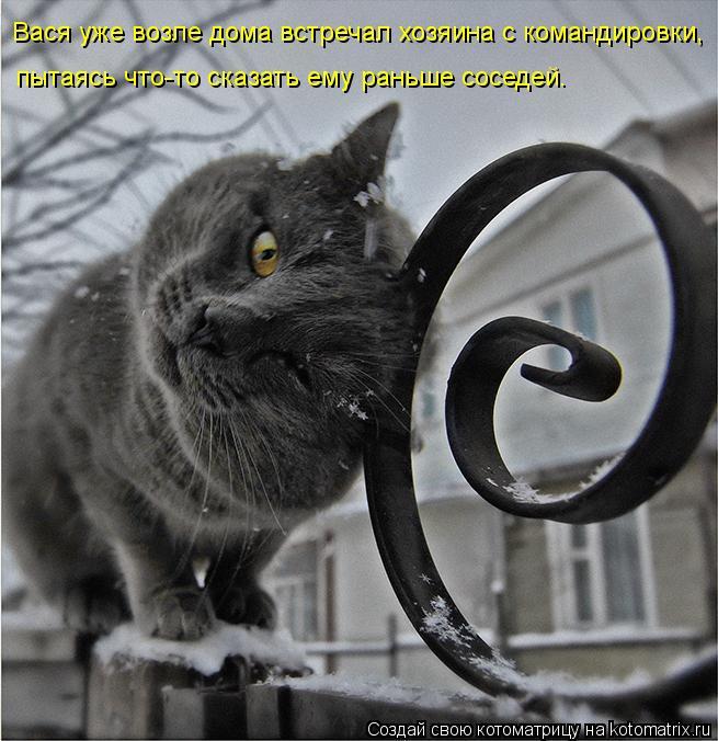 Котоматрица: Вася уже возле дома встречал хозяина с командировки,  пытаясь что-то сказать ему раньше соседей.