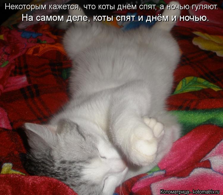 Котоматрица: Некоторым кажется, что коты днём спят, а ночью гуляют.  На самом деле, коты спят и днём и ночью.