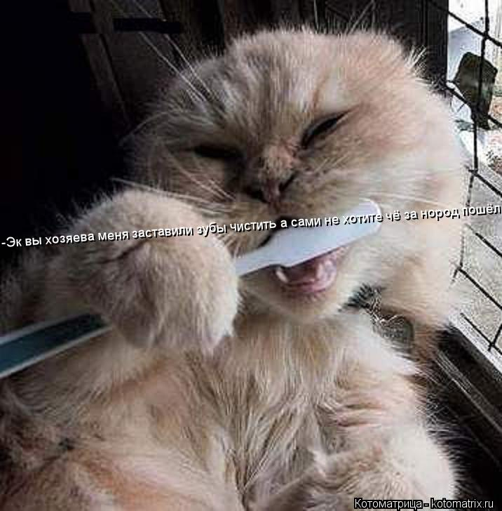 Котоматрица: -Эк вы хозяева меня заставили зубы чистить а сами не хотите чё за нород пошёл