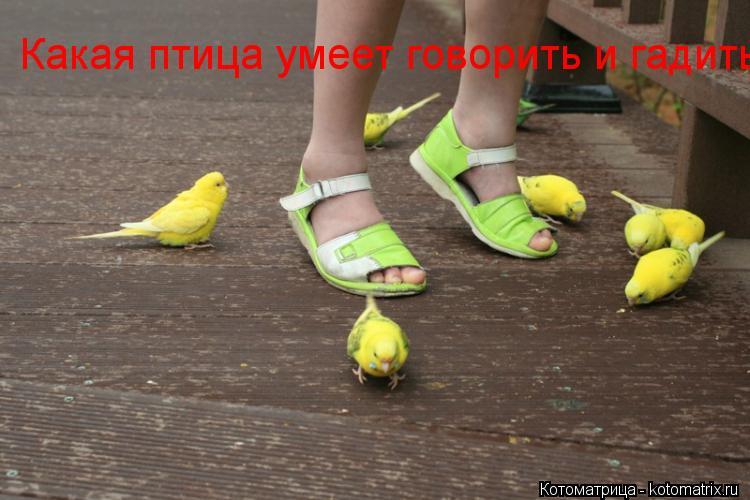 Котоматрица: Какая птица умеет говорить и гадить