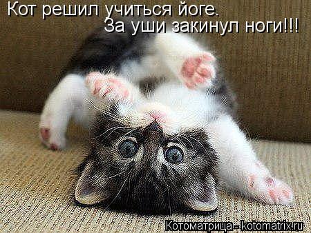 Котоматрица: Кот решил учиться йоге.  За уши закинул ноги!!!