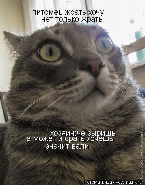 Котоматрица: хозяин:че зыришь питомец:жрать хочу а может и срать хочешь нет только жрать значит вали