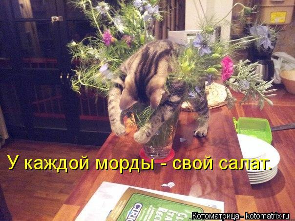 Котоматрица: У каждой морды - свой салат.