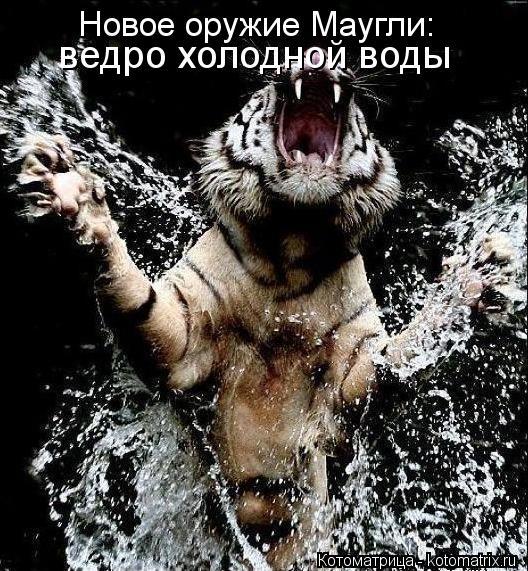 Котоматрица: Новое оружие Маугли:  ведро холодной воды