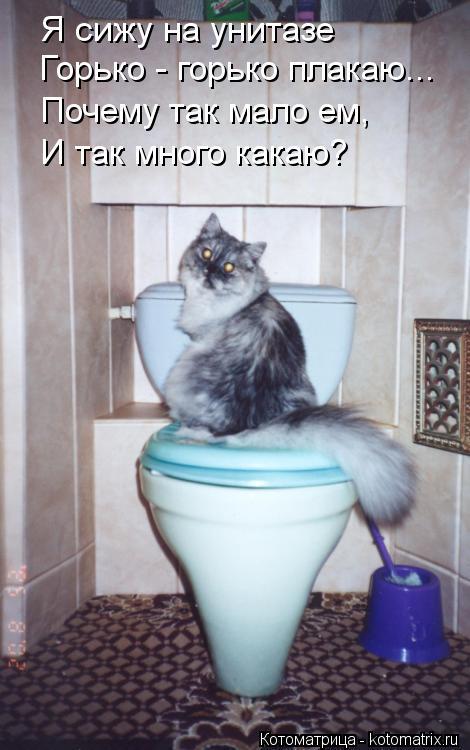 Котоматрица: Я сижу на унитазе Горько - горько плакаю... Почему так мало ем, И так много какаю?