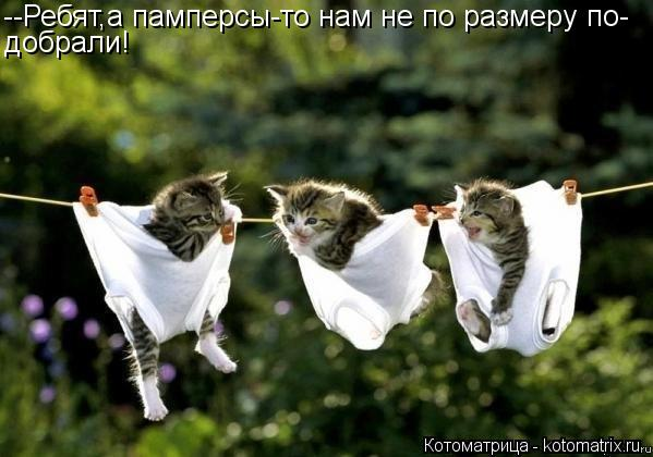 Котоматрица: --Ребят,а памперсы-то нам не по размеру по- добрали!