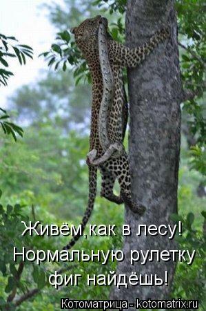 Котоматрица: Живём,как в лесу! Нормальную рулетку  фиг найдёшь!