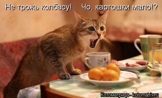 Котоматрица: Не трожь колбасу!    Чо, картошки мало!?