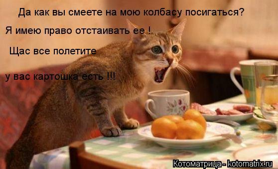 Котоматрица: Да как вы смеете на мою колбасу посигаться? Я имею право отстаивать ее ! Щас все полетите  у вас картошка есть !!!