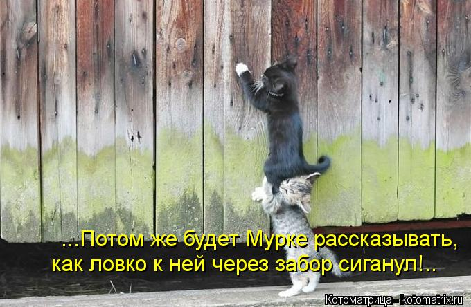 Котоматрица: ...Потом же будет Мурке рассказывать, как ловко к ней через забор сиганул!..