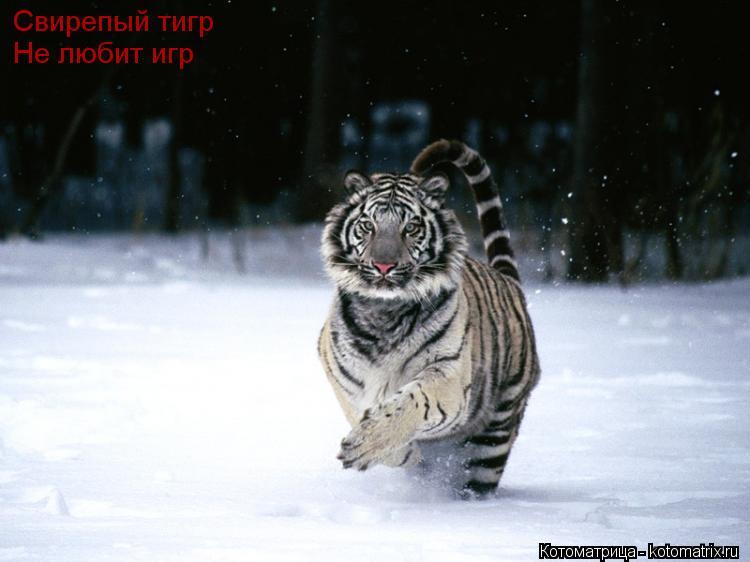 Котоматрица: Свирепый тигр Не любит игр