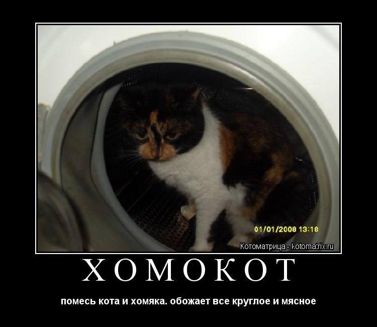 Котоматрица: ХОМОКОТ помесь кота и хомяка. обожает все круглое и мясное