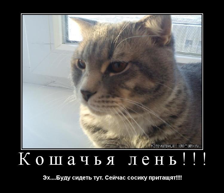 Котоматрица: Кошачья лень!!! Эх....Буду сидеть тут. Сейчас сосику притащят!!!!