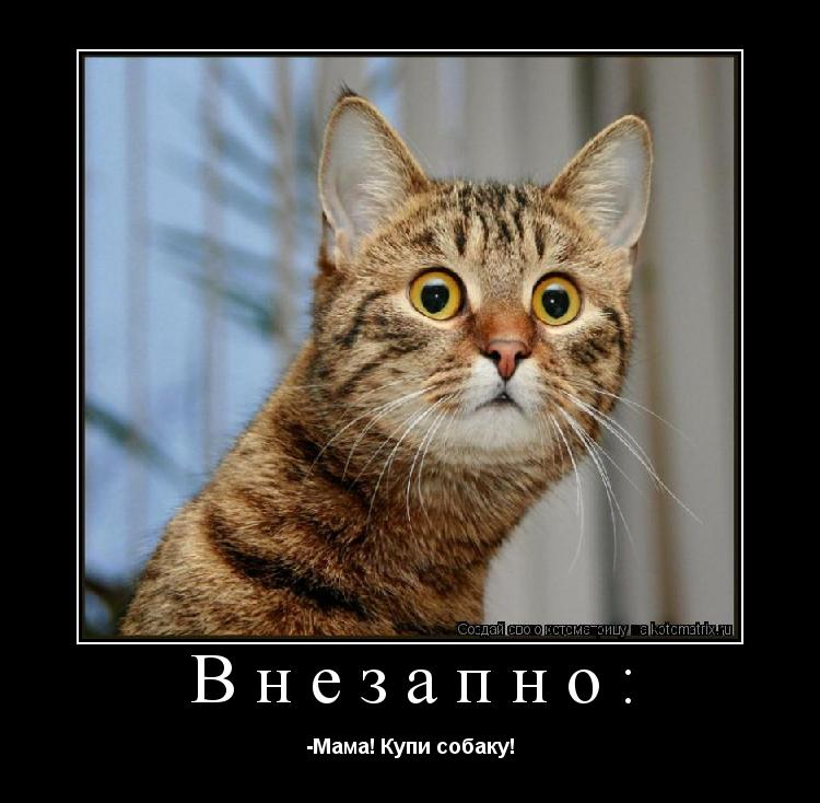 Котоматрица: Внезапно: -Мама! Купи собаку!
