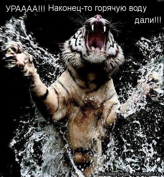 Котоматрица: УРАААА!!! Наконец-то горячую воду  дали!!!