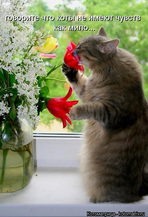Котоматрица: говорите что коты не имеют чувств как мило...