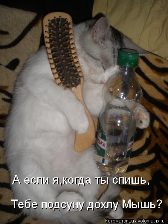 Котоматрица: Тебе подсуну дохлу Мышь? А если я,когда ты спишь,