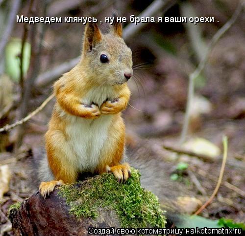 Котоматрица: Медведем клянусь , ну не брала я ваши орехи .