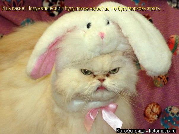 Котоматрица: Ишь какие! Подумали если я буду похож на зайца, то буду морковь жрать...