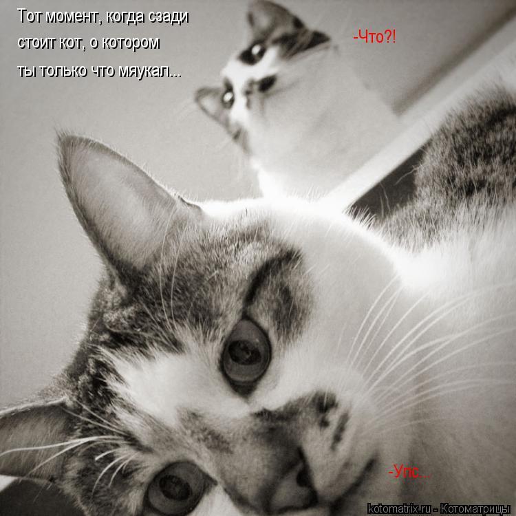 Котоматрица: Тот момент, когда сзади стоит кот, о котором  ты только что мяукал... -Упс... -Что?!