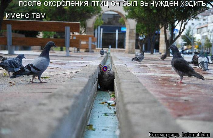 Котоматрица: после окорбления птиц он был вынужден ходить  имено там о о о