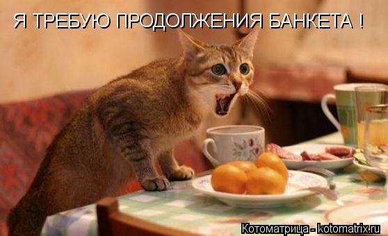 Котоматрица: Я ТРЕБУЮ ПРОДОЛЖЕНИЯ БАНКЕТА !