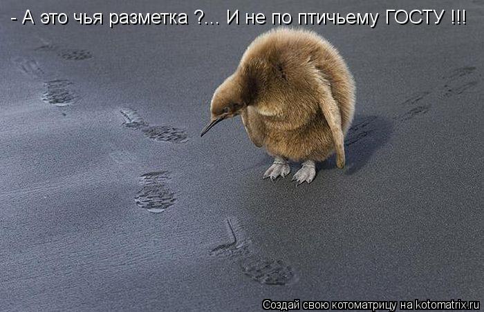 Котоматрица: - А это чья разметка ?... И не по птичьему ГОСТУ !!!