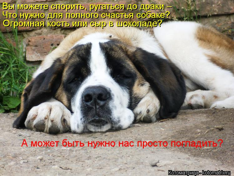 Котоматрица: Вы можете спорить, ругаться до драки –  Что нужно для полного счастья собаке? Огромная кость или сыр в шоколаде?  А может быть нужно нас прос