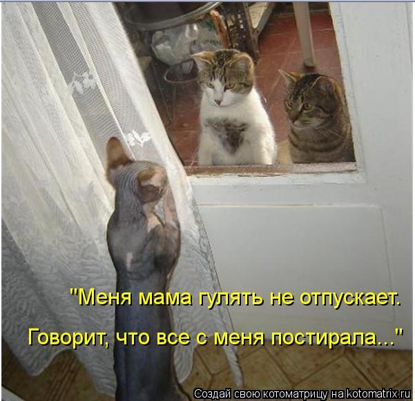 """Котоматрица: """"Меня мама гулять не отпускает.  Говорит, что все с меня постирала..."""""""