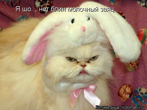 Котоматрица: Я шо.., нет блин молочный заяц