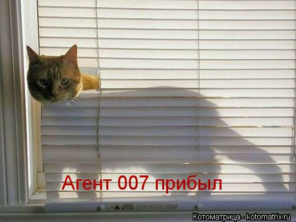 Котоматрица: Агент 007 прибыл