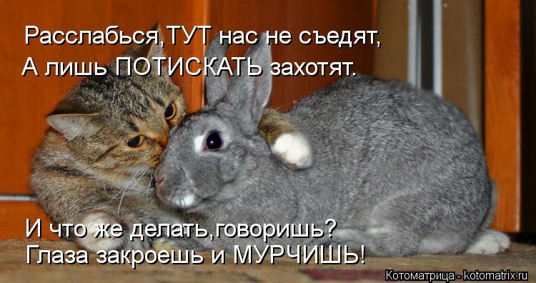 Котоматрица: Расслабься,ТУТ нас не съедят, А лишь ПОТИСКАТЬ захотят. Глаза закроешь и МУРЧИШЬ! И что же делать,говоришь?