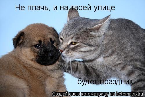 Котоматрица: Не плачь, и на твоей улице  будет праздник!