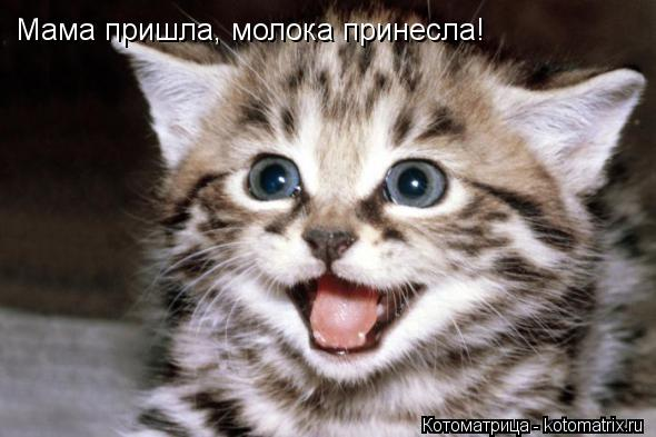 Котоматрица: Мама пришла, молока принесла!