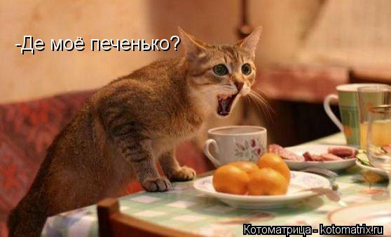 Котоматрица: -Де моё печенько?