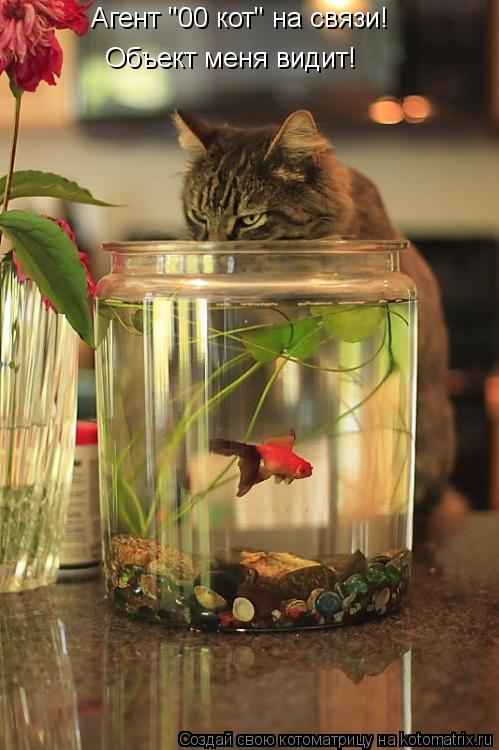 "Котоматрица: Агент ""00 кот"" на связи! Агент ""00 кот"" на связи! Объект меня видит!"