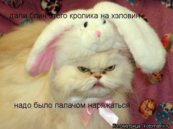 Котоматрица: дали блин этого кролика на хэловин  надо было палачом наряжаться