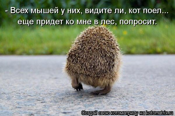 Котоматрица: - Всех мышей у них, видите ли, кот поел... еще придет ко мне в лес, попросит.