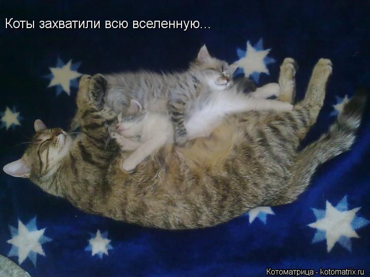 Котоматрица: Коты захватили всю вселенную...