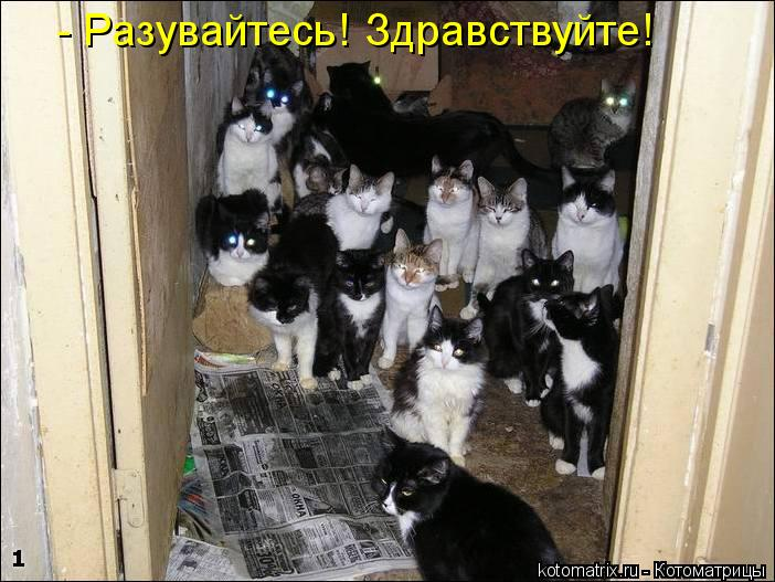 Котоматрица: - Разувайтесь! Здравствуйте!