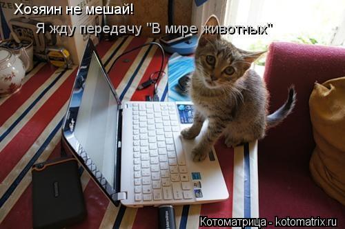 """Котоматрица: Хозяин не мешай! Я жду передачу """"В мире животных"""""""