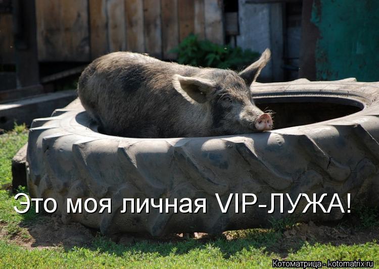 Котоматрица: Это моя личная VIP-ЛУЖА!