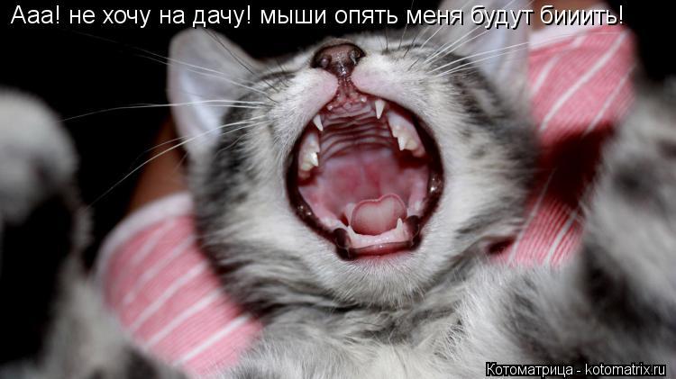 Котоматрица: Ааа! не хочу на дачу! мыши опять меня будут бииить!