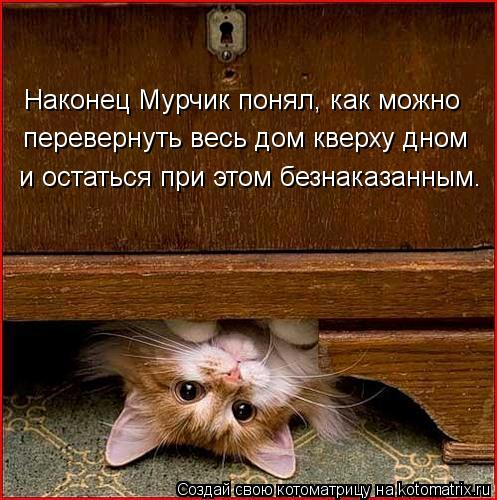Котоматрица: Наконец Мурчик понял, как можно перевернуть весь дом кверху дном  и остаться при этом безнаказанным.