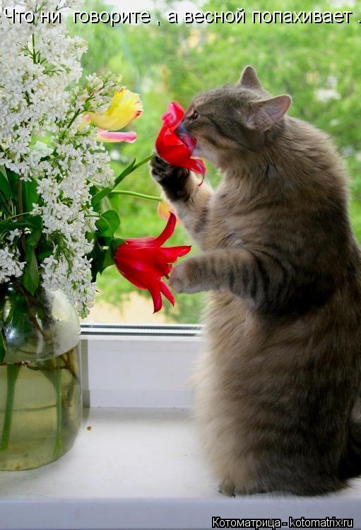 Котоматрица: Что ни  говорите , а весной попахивает ...